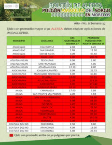 boletin-sem-37-2