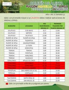 boletin-sem-37-4